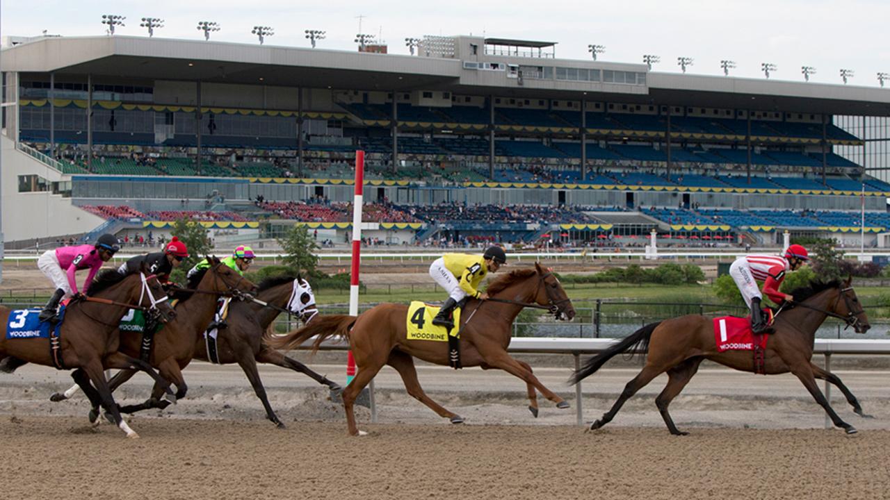 woodbine-horse-racing